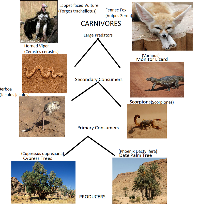 Desert Food Web Food Web in The Sahara Desert
